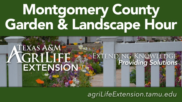 The Extension Hour - Texas A&M Agrilife Extension - Garden & Landscape Hour